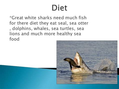 a shark's diet picture 3
