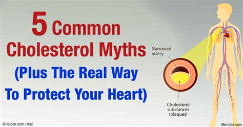 Cholesterol myths picture 1