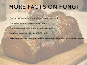 fungi facts picture 6