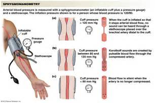 arterial blood pressure picture 6
