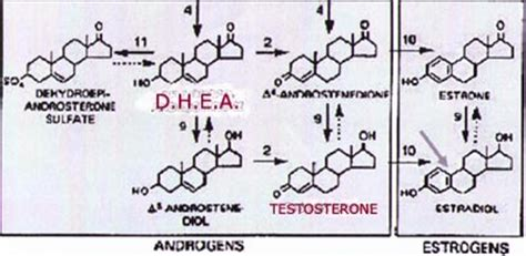 Hgh dhea picture 10