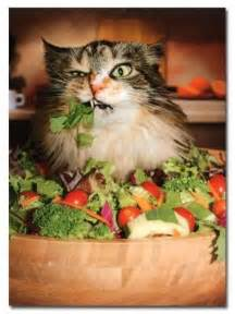 cats diet picture 9