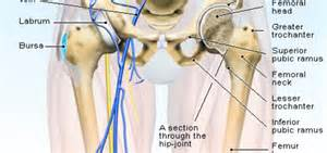 hip pain at leg joint picture 1