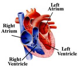 blood flow to male brain picture 14