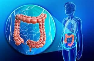 explain colon picture 7