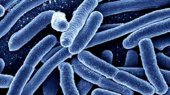 bacterial ecoli picture 19