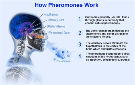 pheromones body odor picture 2