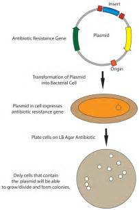 cohen method of bacterial transformation picture 3