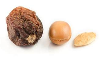 argan tree nut picture 1