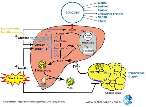 what nutrients does the liver need to metabolize picture 5