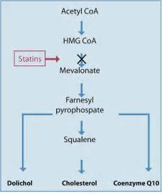 cholesterol statin picture 11