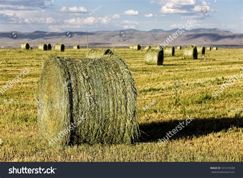 drying alfalfa hay picture 11