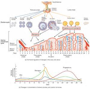 testosterone cycle weeks picture 3