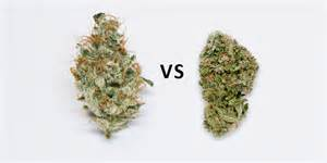 is marijuana good for acne picture 10