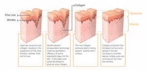 cell regeneration and skin picture 13