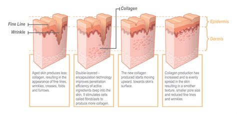 cell regeneration and skin picture 6