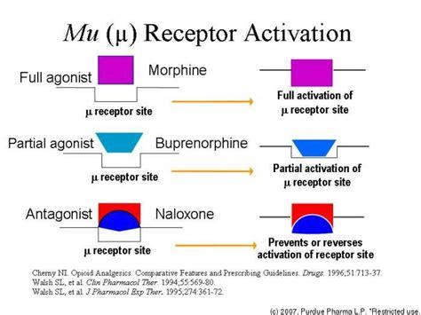 mu opiod receptor herbs picture 1