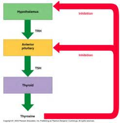 the effects of hyperthyroidism picture 9