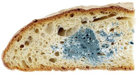 fungus on bread picture 13