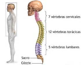 va disability rating for osteoporosis picture 2