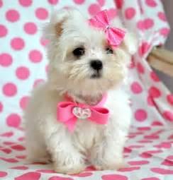 phonerotica white cute fudi picture 17