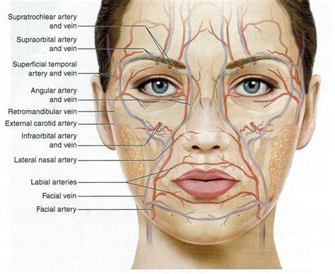artery in lip picture 18