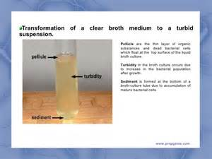 measures turbidity of bacterial growth picture 13