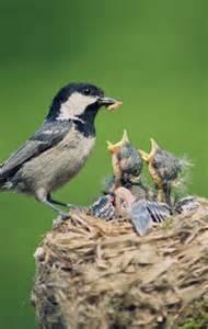 baby bird diet picture 13