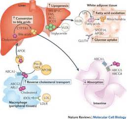 what nutrients does the liver need to metabolize picture 2