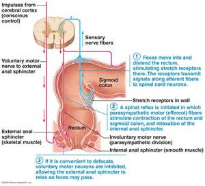 chemical process during digestion picture 5