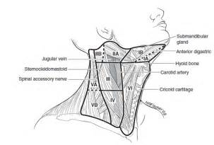 level 2 lymph nodes in thyroid cancer picture 7