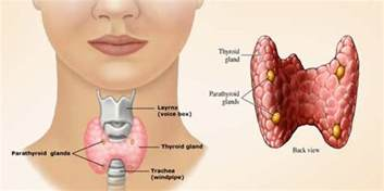 does your thyroid cause enemeia picture 11