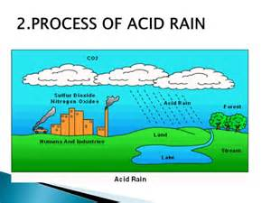 how are h affected by flourides and acids picture 6