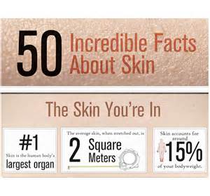 fun facts skin picture 1