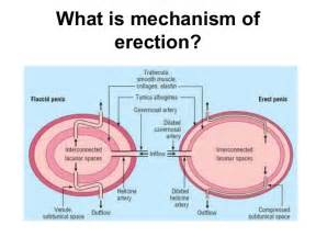 ejaculation during penile ultrasound picture 3