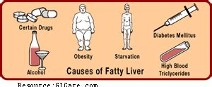 causes fatty liver picture 7