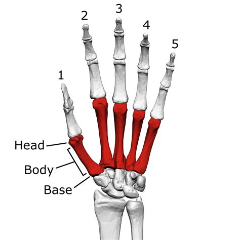proximal interphalangeal joint pain picture 9