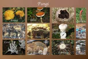 types of fungi picture 9