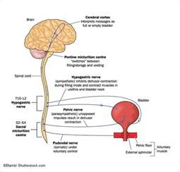 tests overactive bladder picture 15
