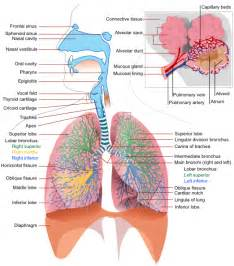 i you take thyroid medicine can you take picture 13