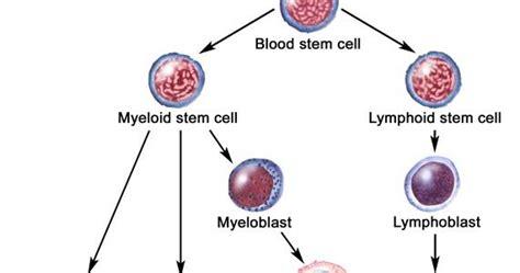 askep leukemia akut picture 7