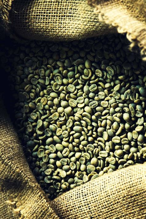 green coffee bean mercury drugstore philippines picture 6