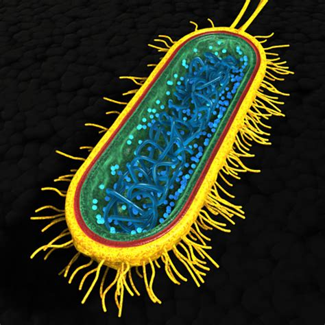 bacterial picture 10