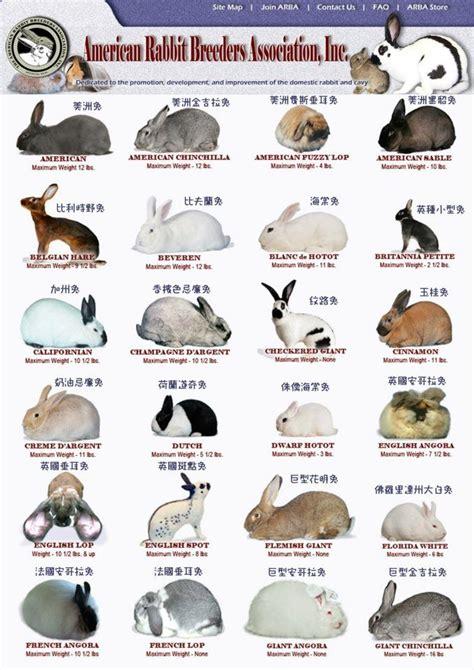 rabbit digestion noises picture 6