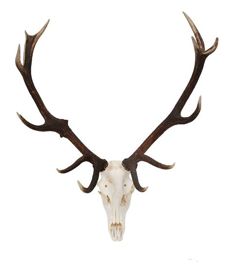 and antler pictures picture 15