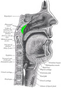 can the thyroid gland feel like obstruction in airway picture 1