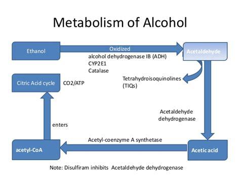 alcoholic fatty liver picture 3