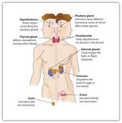 endocrinology of aging female body picture 9
