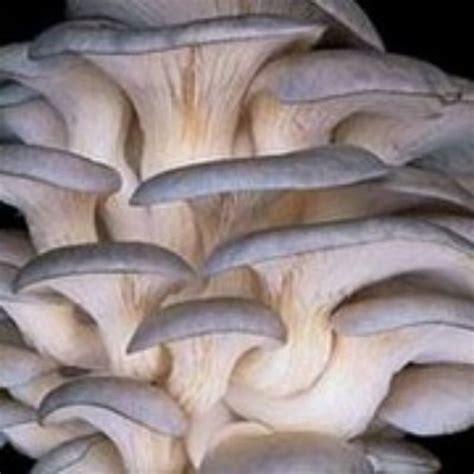 common indoor mushroom picture 19