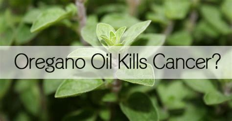 oil of oregano and vaginal b cyst picture 3